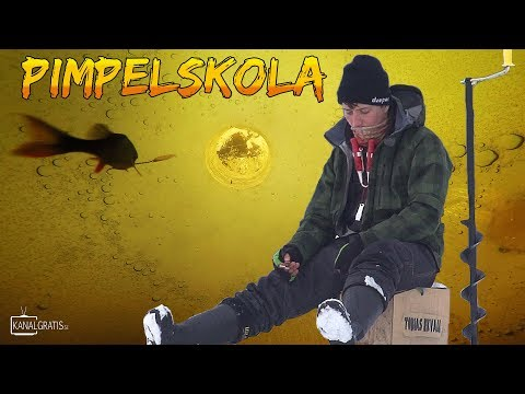 Introduktion til isfiskeri efter aborrer på svensk