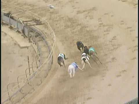 Race 41 South Florida Greyhound Assoc Stake