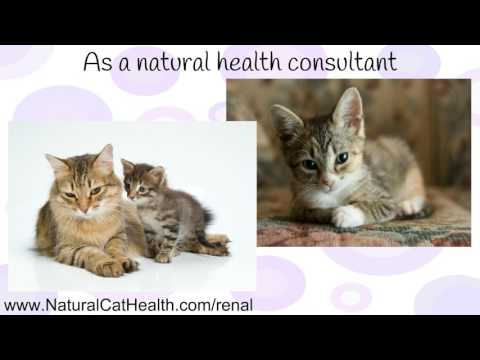Video What Causes Cats To Get Urinary Tract Infections