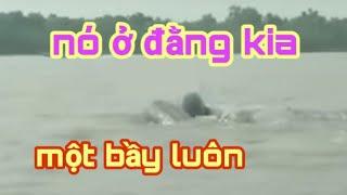 Đi câu cá ngát gần cửa biển, phát hiện đàn cá nược đang săn mồi.../Mưa miền tây.../#34