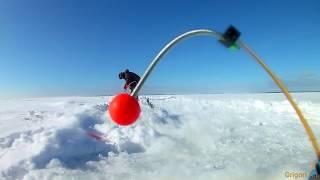 Финский залив зимняя рыбалка на корюшку