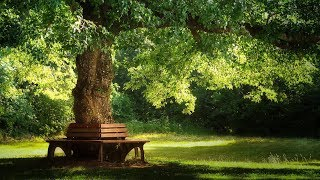 Beautiful Relaxing Music: Pachelbel - Forest Garden