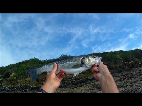 Fiskeri efter havbars med levende rejer