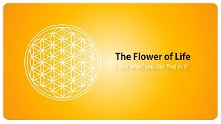 The Flower Of Life And What You Can Find In It - Sacred Geometry