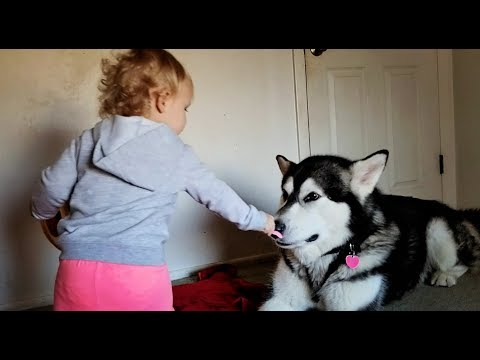 Tonka the Malamute With His Baby Abryella………lol