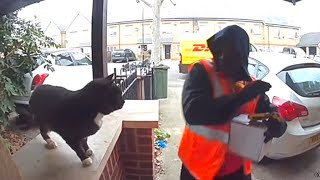 Friendly Cat Scares Away Delivery Man