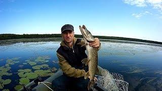 Все о клеве рыбы в октябре во владимирской области