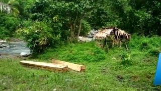 46 Hektare Hutan di TNBNW Alami Kerusakan Parah
