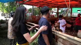 Koko Masuk Kandang Buat Milih Kambingnya Langsung | Best Moment Diary The Onsu (30/7/20)