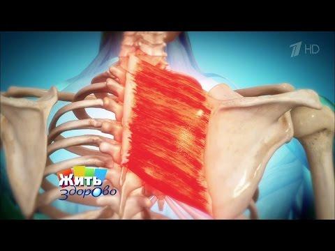 Болит спина 63 года