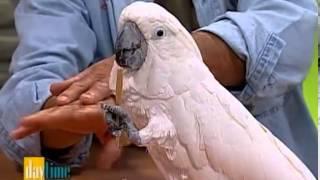 Bird Whisperer - Daytime TV show