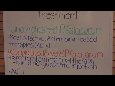 Video Malaria: Plasmodium falciparum