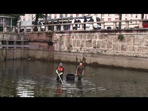 Come disturbare lorzo di perla per pescare su un crucian di video