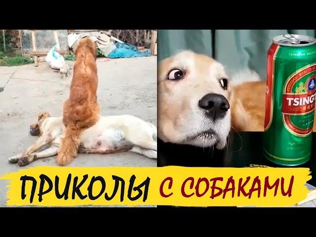 Собаки приколы юмор, прикольные псы / Dogs jokes humor, funny dogs