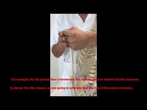 Para el diagnóstico de las articulaciones del hombro