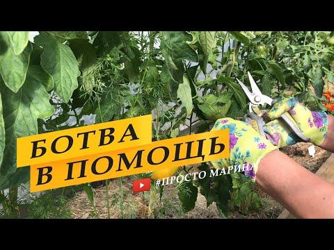 Не выбрасывайте ботву томатов