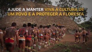 Hwĩn Mbê - óleo de pequi do povo Kĩsêdjê do Xingu
