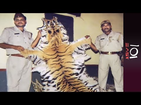 🇮🇳 India: Last Of The Tigers | 101 East Mp3