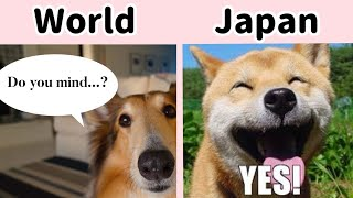 5 Things Only Japanese People Do (Part2)