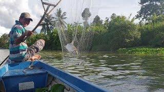 Quá nhanh quá nguy hiểm. Đàn cá ăn lúa nhanh hơn ăn cớm vớt không kịp luôn   Săn bắt SÓC TRĂNG  