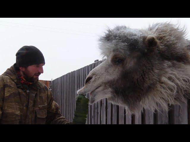 Ангарчане помогли зоопарку «Лапки»