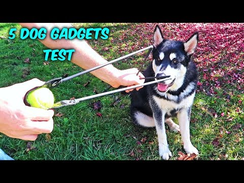 5 Dog Gadgets Put to the Test – Part 10