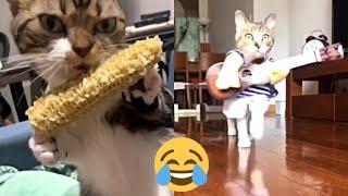 Meilleures Vidéos Drôles de Chat et de Chien 🐶🐱- Best Funny DOGS et CATS #74
