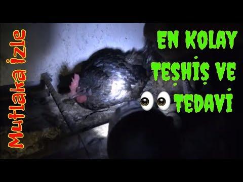 Hasta Tavuğu Gece Teşhis ve Tedavi Etme!!!