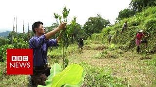 Will organic revolution boost farming in India? - BBC News | Kholo.pk