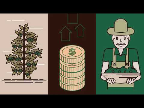 Brasil é o país que mais produz café sustentável no mundo