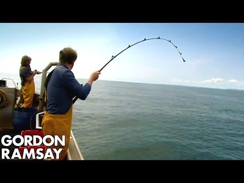 Gordon Ramsay fanger og tilbereder havål