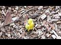 О нищебродах. Иммиграция и жизнь в Австралии. Ответы на вопросы часть 5. видео 172