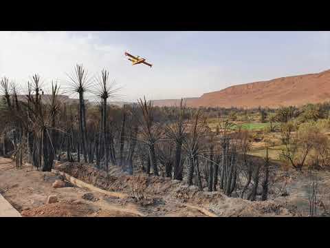 Maroc - Le rôle des coopératives de services dans la lutte contre les incendies dans les oasis marocaines