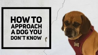 How to approach a dog you don't know