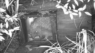 Wildlife Trail Camera - 1.5.2019