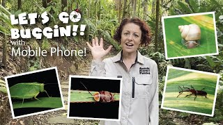 Come and see what you can find and photograph on a Let's Go Buggin Tour in the Cairns Botanic Gardens.  You can capture great video and photos using your mobile phone.   All of this footage was filmed with my iPhone 11 Pro, November 2020
