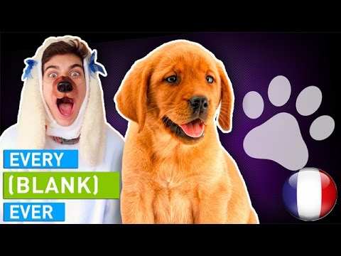 EVERY DOG EVER VOSTFR