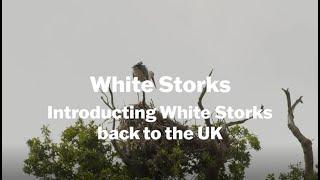 Thumbnail for White Storks: Introducing White Storks Back to the UK