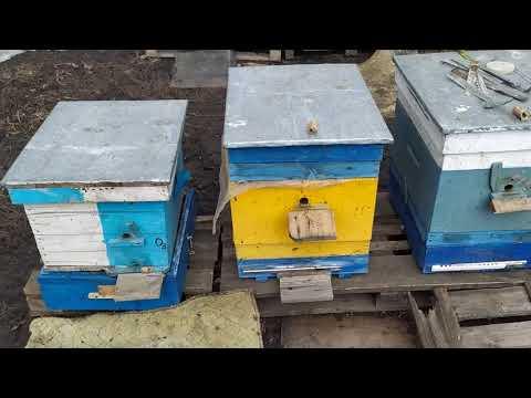 Обзор пасеки, мини-облет, состояние погоды, усадьба пчеловода. 20/03/2021.