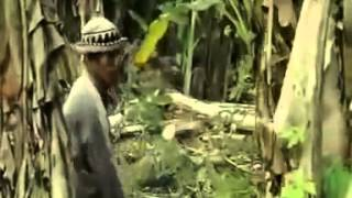 Amazonka   Lektor PL