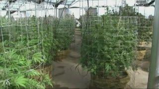 Regulators Prepare For Potential Marijuana Legalization In NC