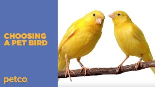 How to Choose the Best Pet Bird for You (Petco)