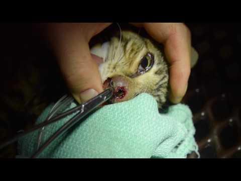 Worm Video at pantao worm