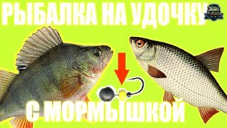 Летняя рыбалка на окуня и плотву