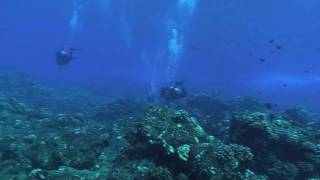 preview picture of video 'Scuba Diving with Hammerhead Sharks off of Mokuhooniki, Molokai Hawaii on 10/16/09'