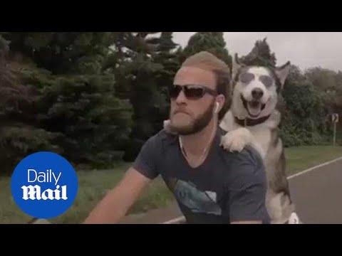 Пес - байкер!