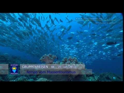 Tauchabenteuer mit der  M/V Golden Dawn zu den  Eastern Fields, Ashmore und Boot Reef in PNG, Eastern Fields - Coral Sea,Papua-Neuguinea