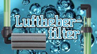 Der Luftheberfilter | simpel, vielseitig, sicher für Garnelen | Schwammfilter | Aquarientechnik
