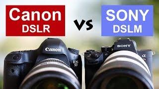 Canon vs Sony Systemwechsel Canon 5D IV zur Sony A7 III - Mirrorless vs Spiegelreflex DSLR