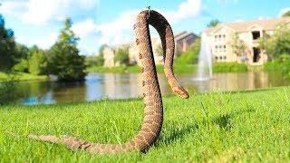 Caught Venomous Snake While Fishing!! (Dangerous) - Video Youtube